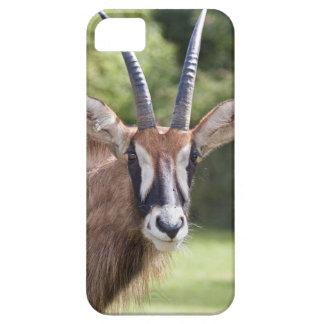 Roan Antelope iPhone 5 Case