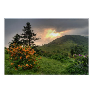 Roan Mountain Art Print