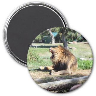 Roar! Lion Roaring! Magnet