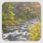 Roaring Brook in fall in Vermont's Green 2 Stickers