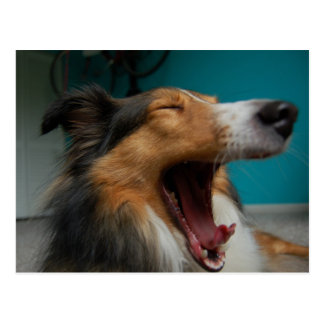 Roaring Dog Postcards
