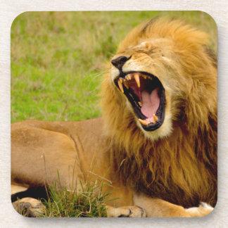 Roaring Lion Coaster