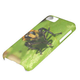 Robber Fly iPhone 5C Cases