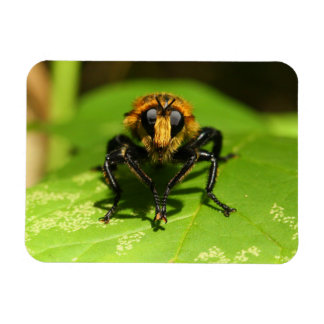Robber Fly Magnet