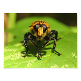 Robber Fly Photo Print