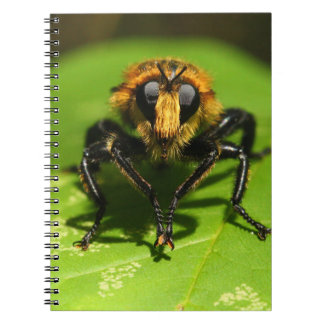 Robber Fly Spiral Note Book