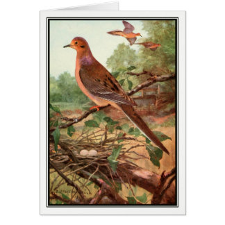 Robert Bruce Horsfall - Vintage Mourning Dove Greeting Card
