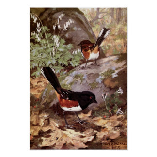 Robert Bruce Horsfall - Vintage Spotted Towhee Poster