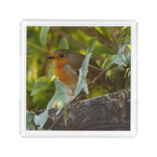 Robin Acrylic Tray
