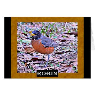 Robin (American Robin) Card