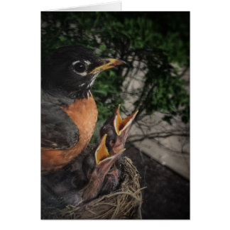 Robin and Babies Blank Note Card