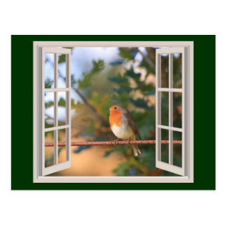 Robin Bird at Window Postcard