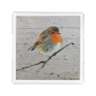 Robin bird redbreast draftwood background acrylic tray