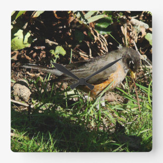 Robin Bird Wildlife Animal Photography Clocks
