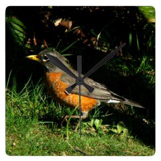 Robin Bird Wildlife Animal Photography Wall Clocks