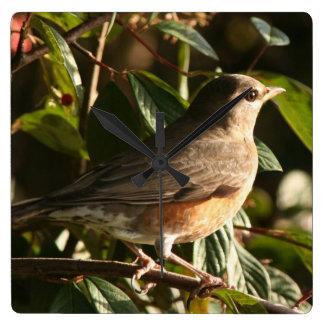Robin Bird Wildlife Animal Photography Wallclocks