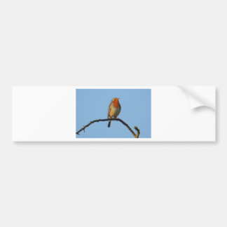 Robin Bumper Sticker
