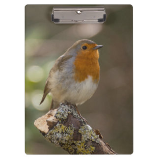 Robin Clipboard