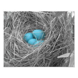 Robin eggs art photo