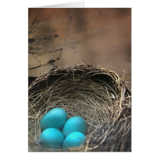 Robin Eggs Blank Note Card
