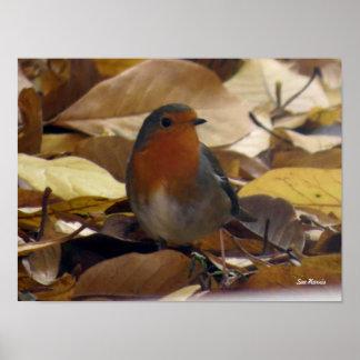 Robin in leaves poster