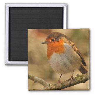 Robin in sunshine magnet