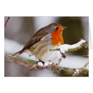 Robin in Winter Cards