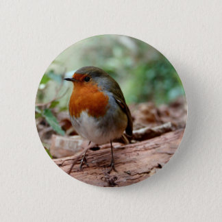Robin on a limb 2 inch round button