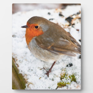 Robin on a snowy log plaque