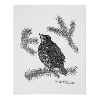 Robin Pen and Ink Drawing Poster