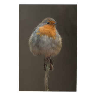 Robin picture wood wall art