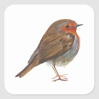 Robin Red Breast Bird Watercolor Painting Artwork Square Sticker