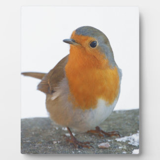 Robin Red Breast Plaque