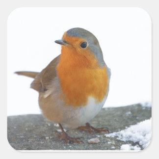 Robin Red Breast Square Sticker