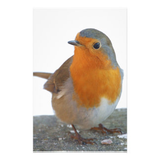 Robin Red Breast Stationery Design