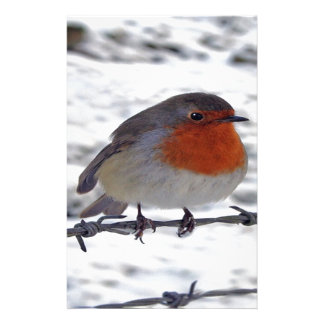 Robin Redbreast Customized Stationery