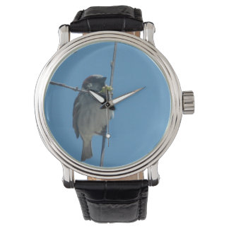 Robin -  Watch