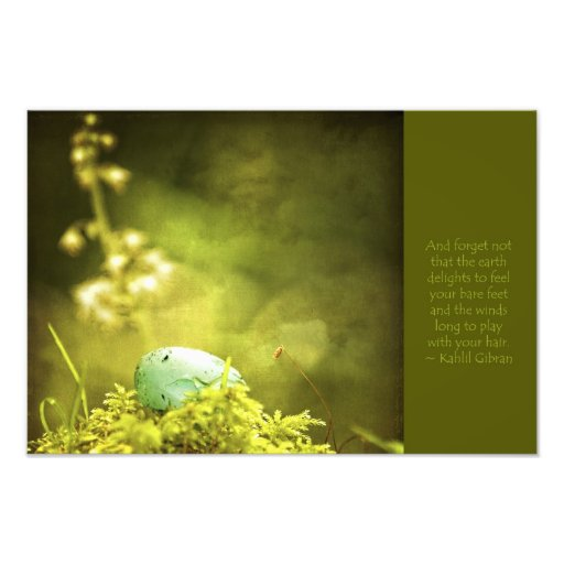 Robin's Egg on Moss with Inspirational Saying Photograph