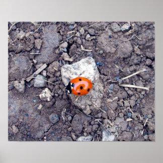 Rock Climber Ladybug Poster