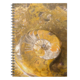 Rock Containing Many Fossils & Ammonite Photo Notebooks