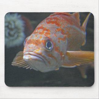 Rock Fish Mouse Pad