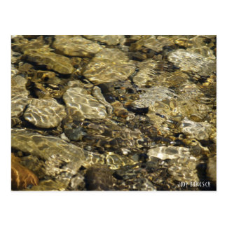 Rock Pool Nature Collection Postcard