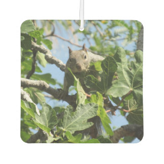 Rock Squirrel Car Air Freshener