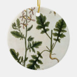 Rocket, plate 242 from 'A Curious Herbal', publish Ceramic Ornament