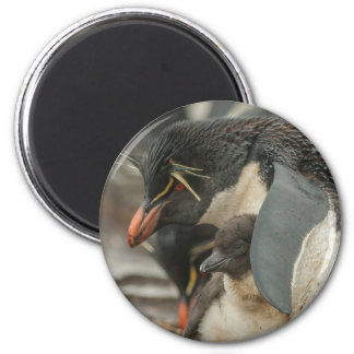 Rockhopper penguin and chick 2 inch round magnet