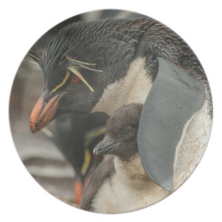 Rockhopper penguin and chick plate