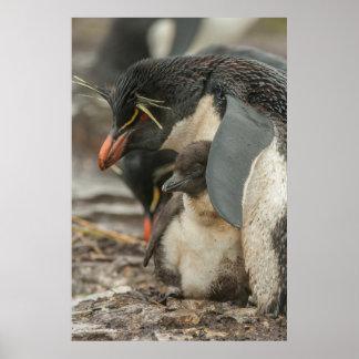 Rockhopper penguin and chick poster