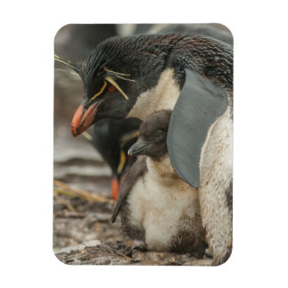 Rockhopper penguin and chick rectangular photo magnet