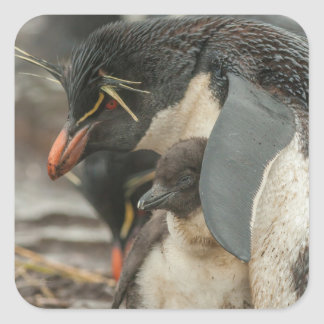 Rockhopper penguin and chick square sticker