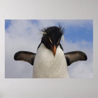 Rockhopper Penguin Eudyptes chrysocome Print